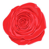 Beautiful red rose  flower with the effect of a watercolor drawing isolated on white background. — Cтоковый вектор