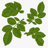 Set of beautiful green leaves isolated on white. — Stockvektor