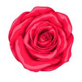 美丽的红玫瑰在白色背景上孤立. — 图库矢量图片