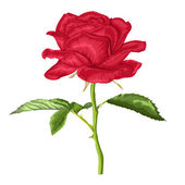Beautiful red rose with long stem and leaves with the effect of a watercolor drawing isolated on white — Stockvector