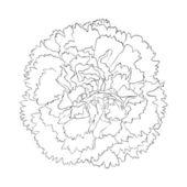 Beautiful monochrome black and white carnation flower isolated on white background. — Stock Vector