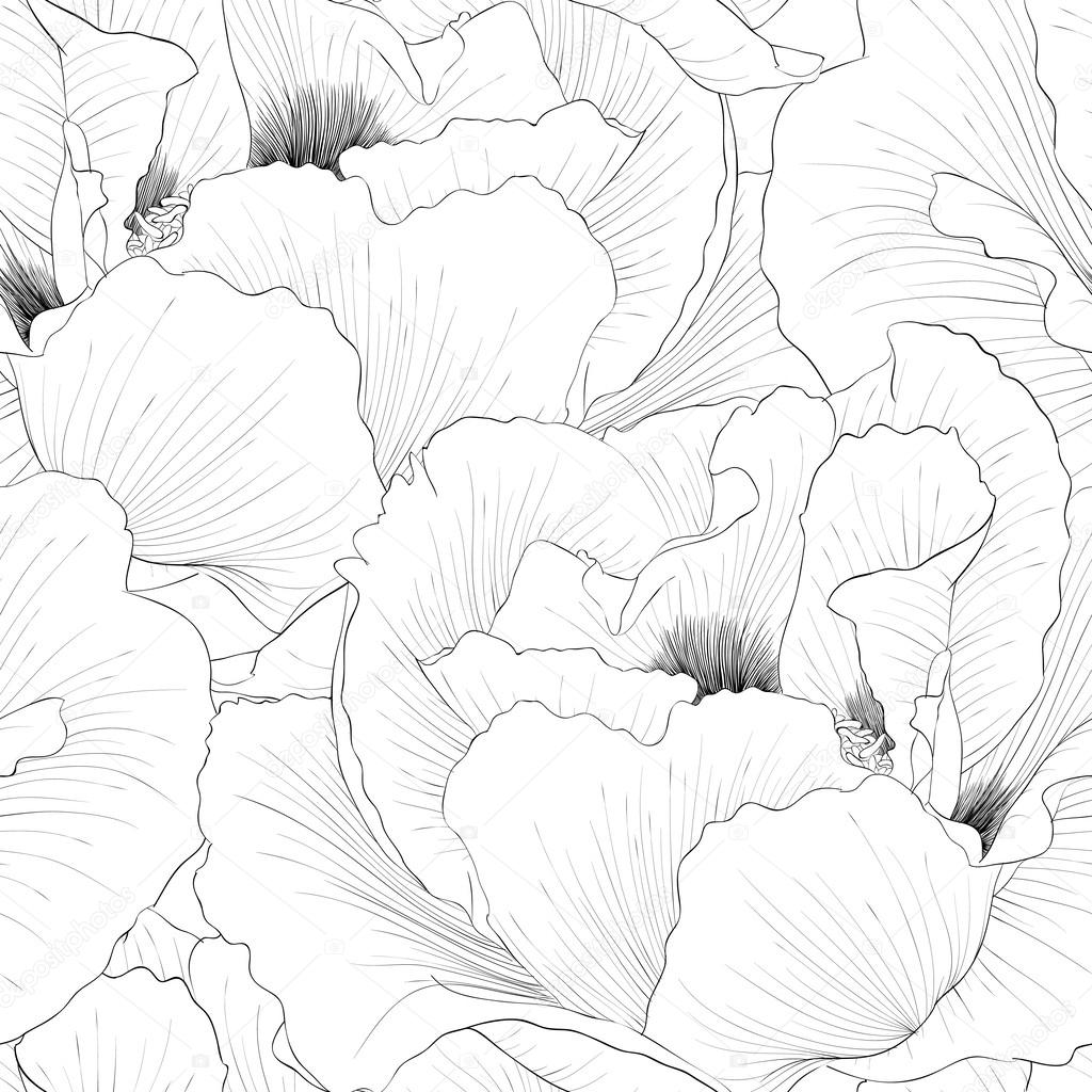手绘轮廓线和描边— vector by jane_hulinska