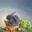 Easter bunny on a beautiful spring meadow with dandelions in front of a basket with Easter eggs — Stock Photo