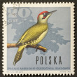 Woodpecker postage stamp - Stok fotoraf