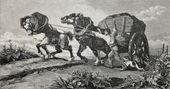 Cavalli alla spina — Foto Stock