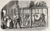 Dutch cowshed — Stock Photo