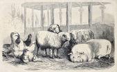 Farm animals bis — Stock Photo