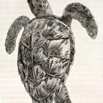 Loggerhead sea turtle — Stock Photo #13306187