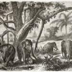 ������, ������: Elephant herd