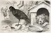 Common Raven — Stock Photo