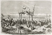 Australian burial bis — Stock Photo