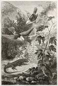 Galapagos fauna — Stockfoto