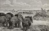 Elephants grazing — Stock Photo