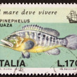 Stock Photo: Dusky Grouper postage stamp