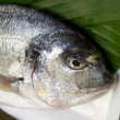 Closeup of gilthead bream — Stock Photo