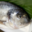 Stock Photo: Closeup of gilthead bream
