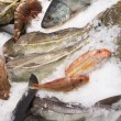 Stock Photo: Variety of fish and seafood on market ice display