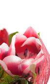 лепесток тюльпана, изолированные на белом, копией пространства — Стоковое фото