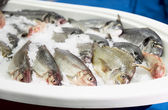 Cold container with seabass and dorado — Stock Photo