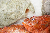 Two fishes on market display — Stock Photo
