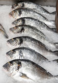 Seabass on cooled market display — Stock Photo