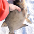 Really big bream in fisherman's hand — 图库照片