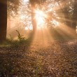 Sunrise in foggy forest - Stock Photo