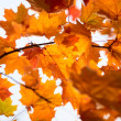 Bright leaves on autumn day — Stock Photo