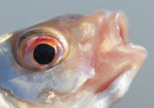 Head of roach, close-up shot — Stock Photo