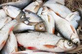 Pile of fish, close-up — Stock Photo