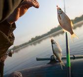 Lyckad morgon - fisk biter bra — Stockfoto