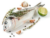 Gilt-head bream with herbs and spices — Stock Photo