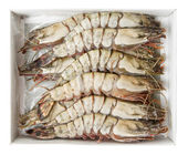 Giant prawns in retail pack, isolated with clipping path — Stock Photo