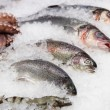 Trout, seabass and other seafood on market display — Stock Photo