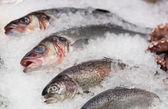 Alabalık, levrek ve diğer deniz ürünleri pazarında tezgah üzerinde — Stok fotoğraf