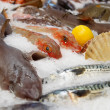 At the fish market — Stock Photo