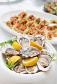 Fresh opened oysters — Stock Photo