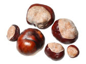 Conkers - horse chestnuts — Stock Photo