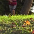Boy with soccer ball in Fall Autumn leaves — Stock Video