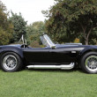 Постер, плакат: Shelby Cobras at the Los Angeles Arboretum