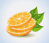 Orange Segments — Stock Vector