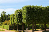 Neatly trimmed trees in a park — Stock Photo
