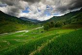 рисовые террасы — Стоковое фото
