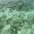 Crystal clear water of tropical sea — Stock Video #14287349