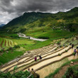 Residents of the North Vietnamese working in the rice terraces n — Stock Photo #16252091