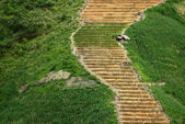 On the steep rice terraces, is a lonely hut — Stock Photo