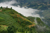 Foggy morning in the mountains of Sapa — Stock Photo
