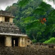 Ruins of ancient Maycity of Palenque, Mexico — Photo #21701011