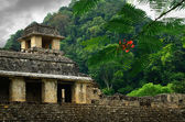 The ruins of the ancient Mayan city of Palenque, Mexico — Foto de Stock