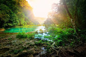 Sunny morning in the mountainous jungle of the national park Sem — Stock Photo